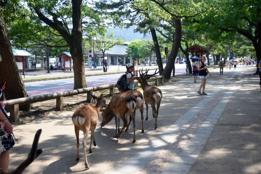 Nara deer crowd Nobori-oji Street | Photo by Alexandra Pamias