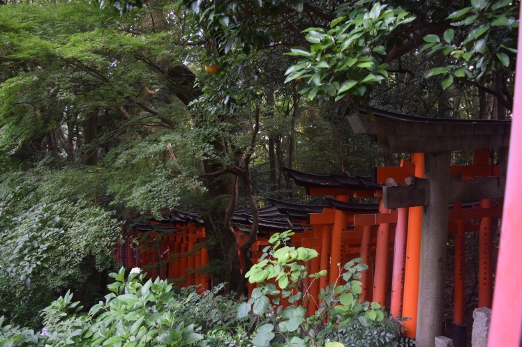 The vermilion torii gate tunnels disappear down Mount Inari into the trees. | Photo by Alexandra Pamias